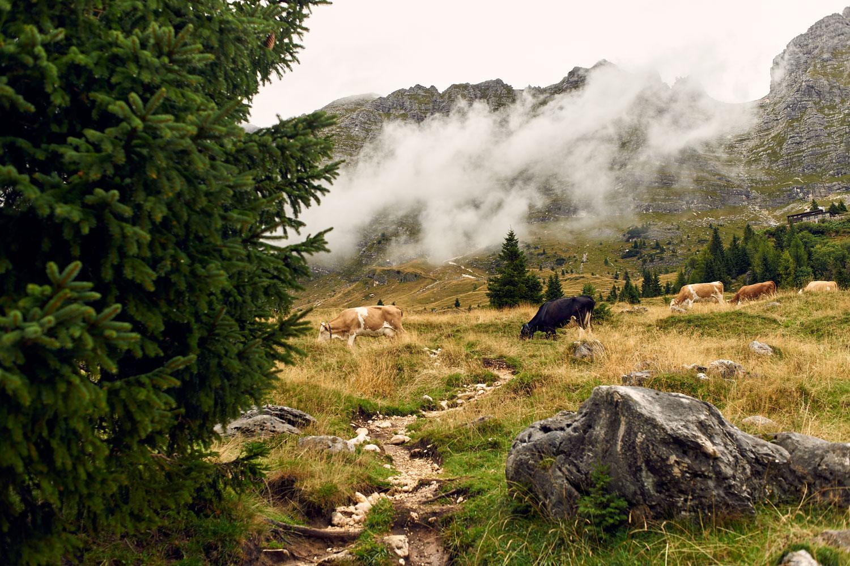 _DSC0893altipiano del Montasio con la pioggia