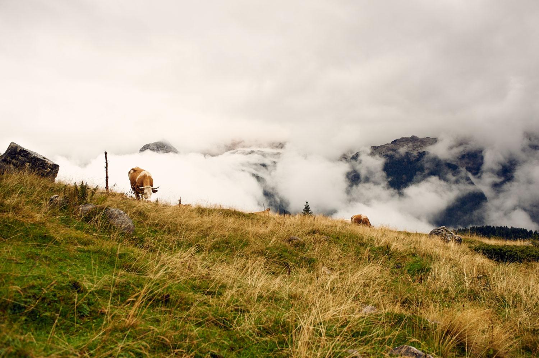 _DSC0973altipiano del Montasio con la pioggia