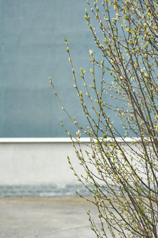 spring_DSC8898