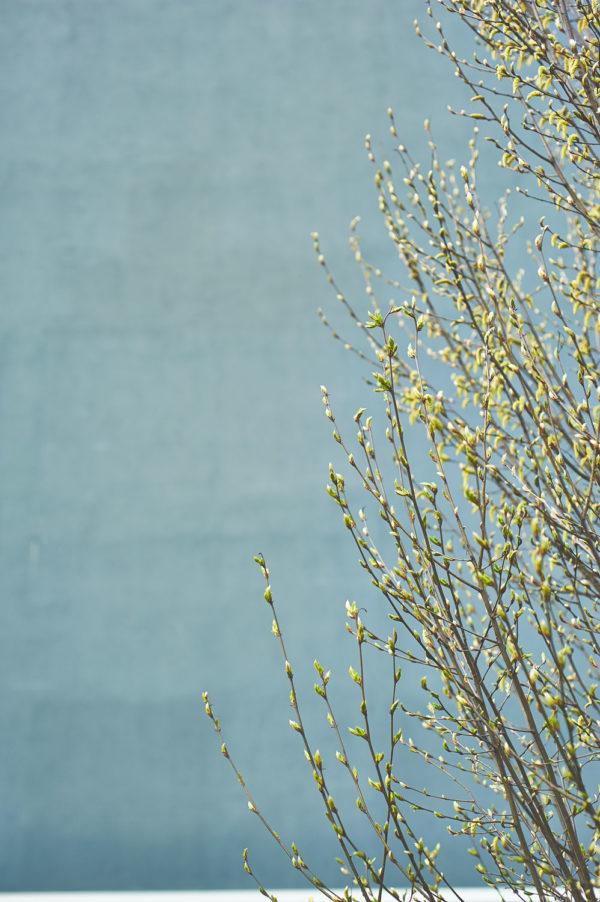 spring_DSC8899