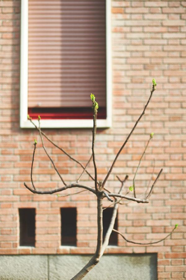 spring_DSC9278