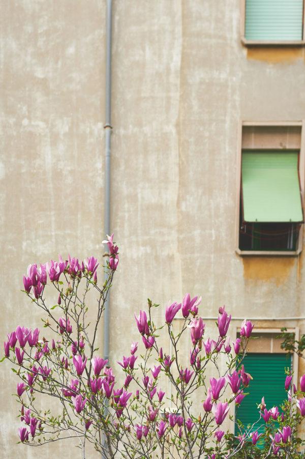 spring_DSC9288
